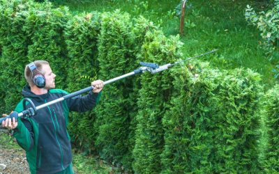 Do You Need Full-Service Landscaping?