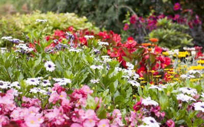 Rain Gardens: Perfect for All Types of Weather
